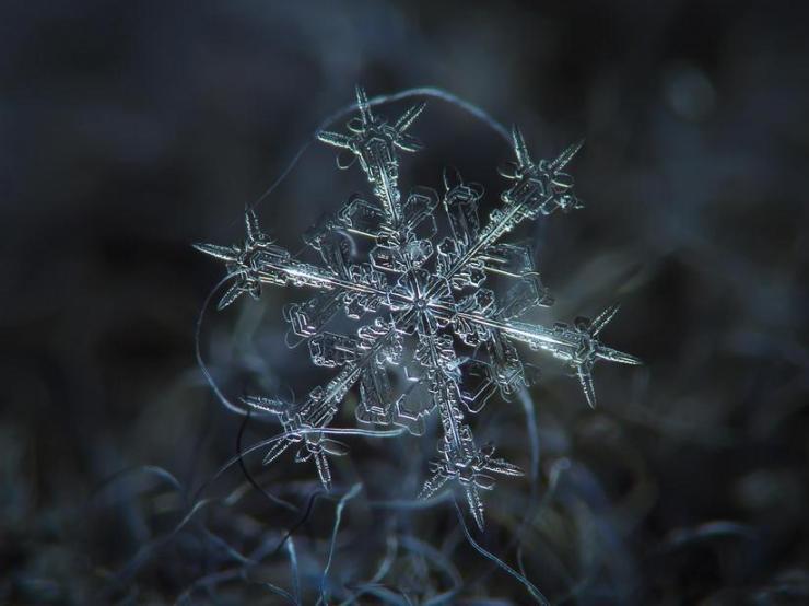macro snow flake003