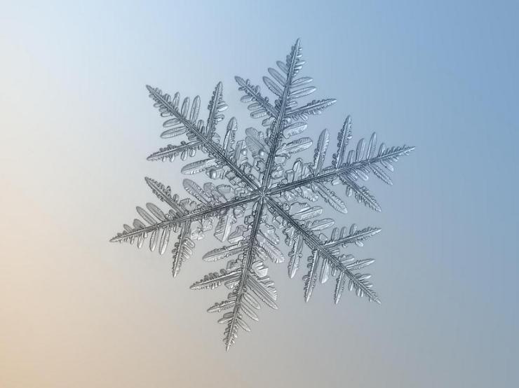 macro snow flake006