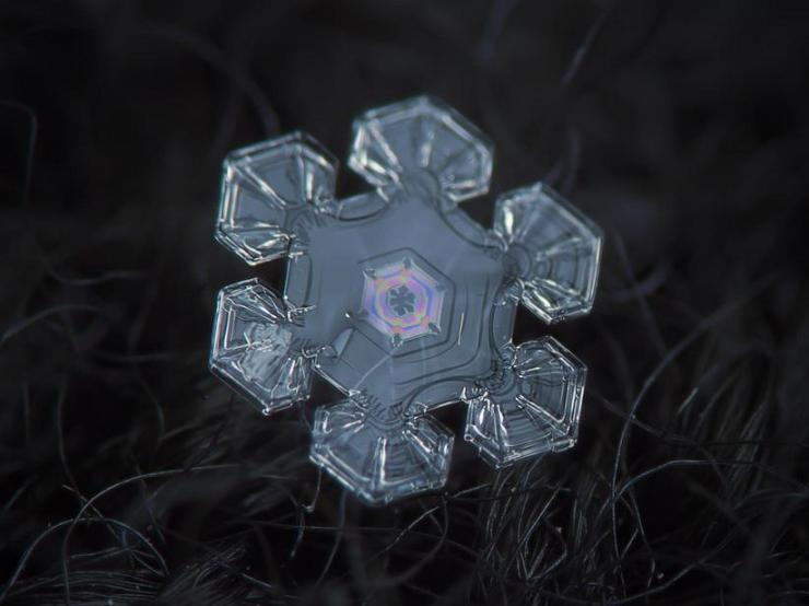 macro snow flake009