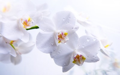How To Care For Orchids Flower - InspirationSeek.com