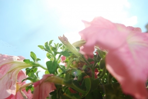 flower-with-sunshine-1426031-m