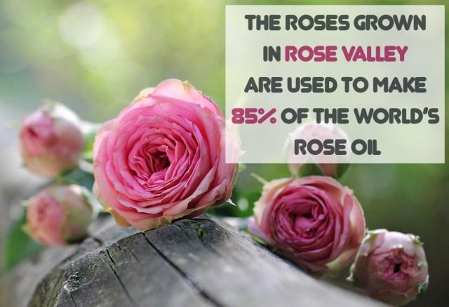roses-bulgaria