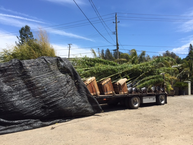 Timber Bamboo - Loaded For Delivery