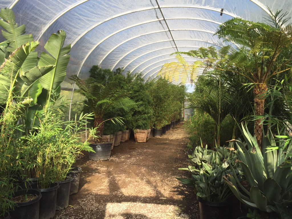 Greenhouse at Instant Jungle