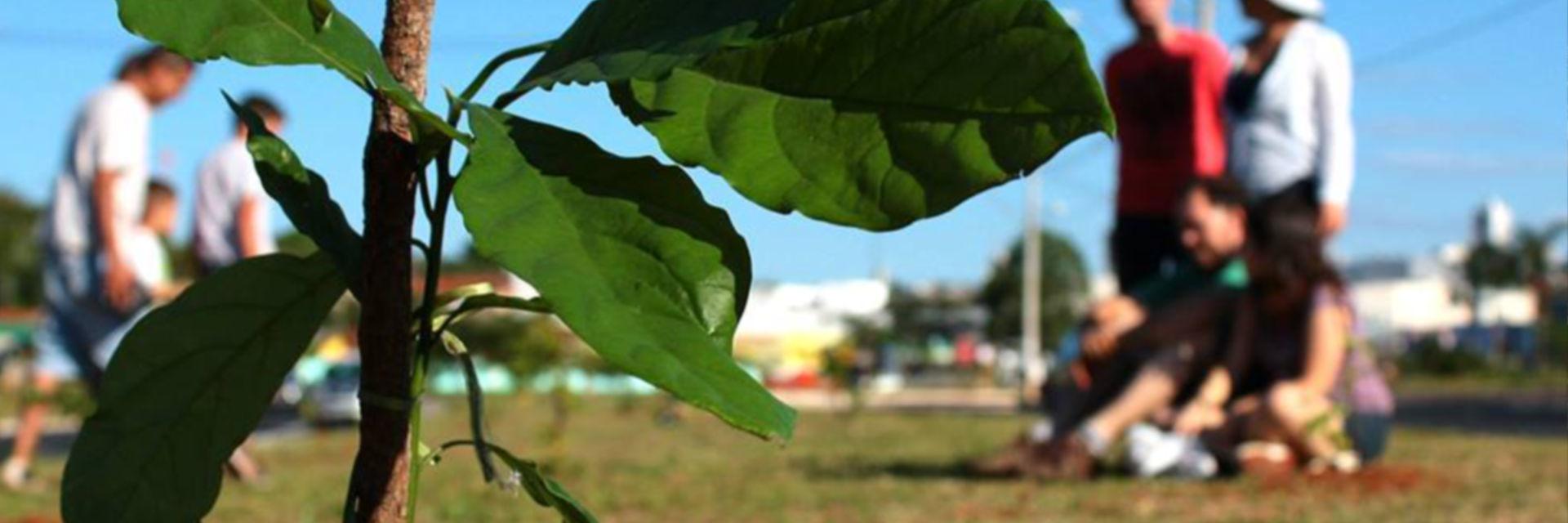 Gestão Ambiental – Região de Bauru
