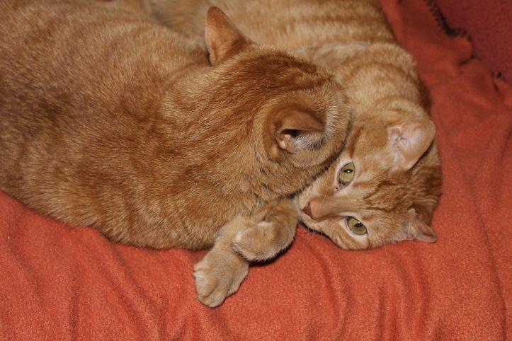 Heeblee and Hooblee all snuggled up