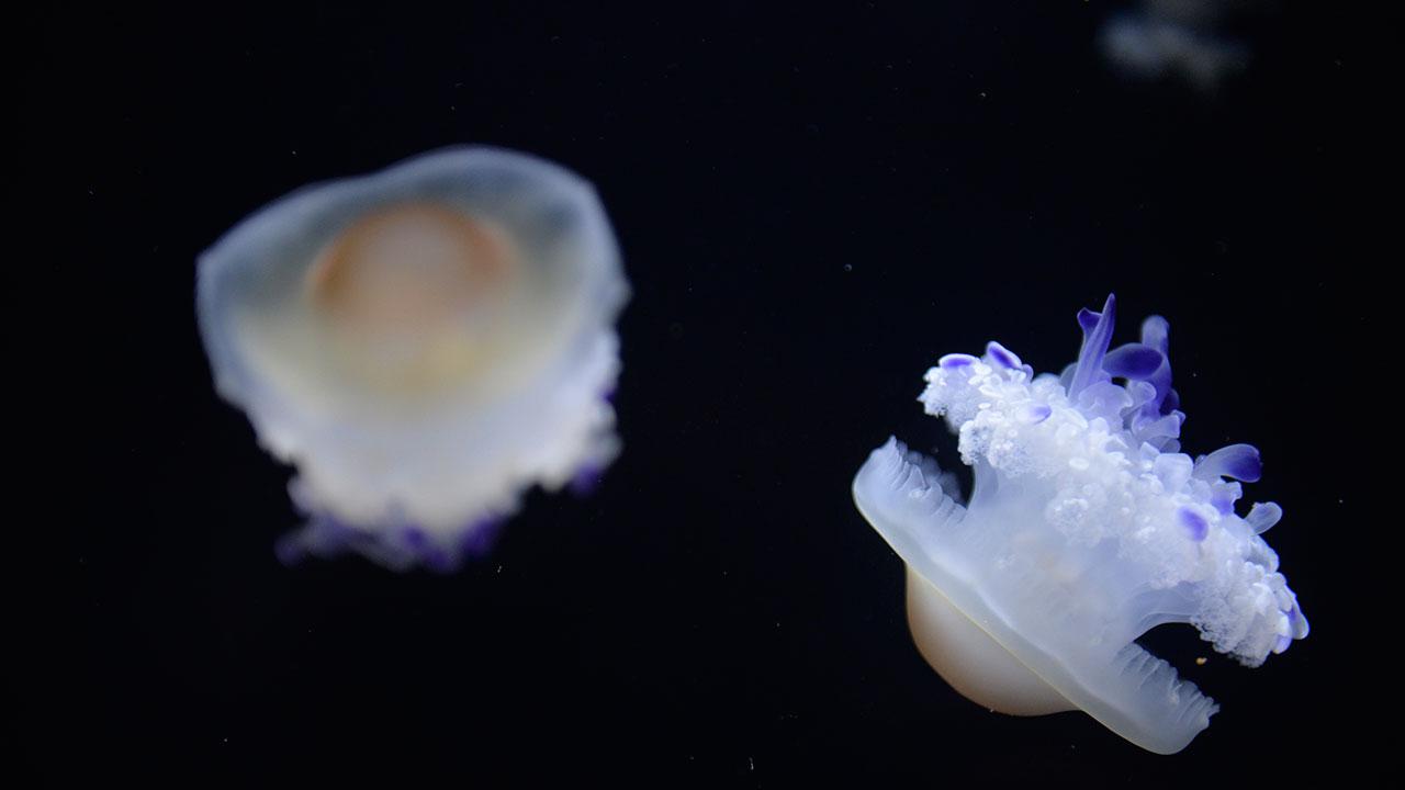 aquariumguide_0001_07