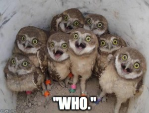 Who Owls