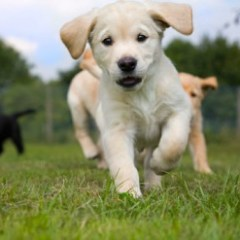 Puppy Tips 7