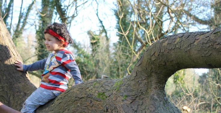 denham country park tree