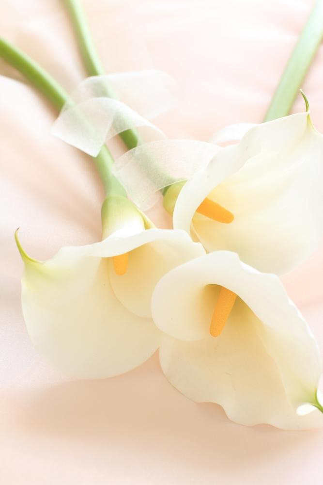 Calla lilly wedding flowers