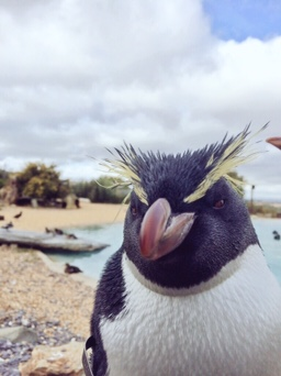 penguin at whipsnade