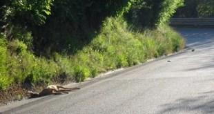 A Perugia convegno sulla prevenzione delle collisioni tra fauna selvatica e veicoli
