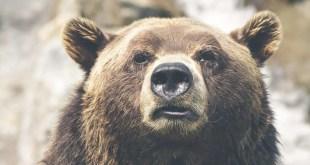 Conservazione dei grandi carnivori. FACE, CIC e ELO condannano la decisione della Romania