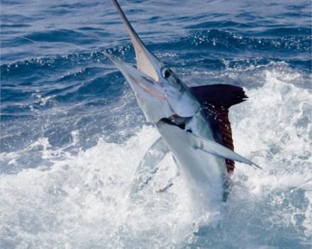 Deep sea offshore in daytona beach outdoor adventures for Daytona beach deep sea fishing