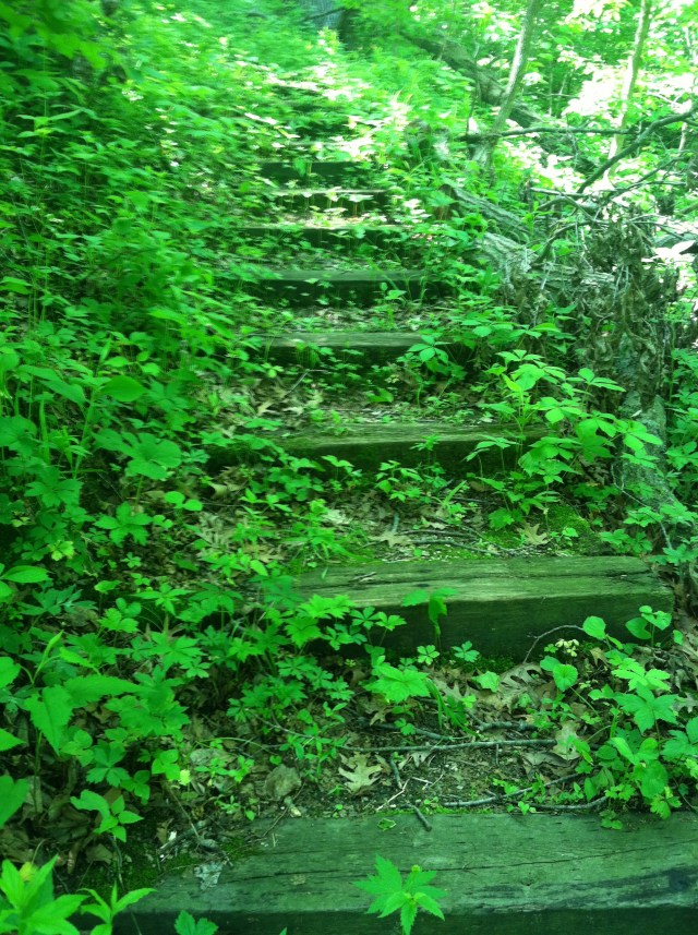 Woodland Hills Trails - Wooden Steps