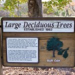 Large Deciduous Trees