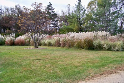 Ornamental Grasses 1