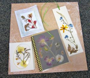 Educational Program-Pressed Flowers