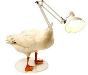 Lamp with a duck body