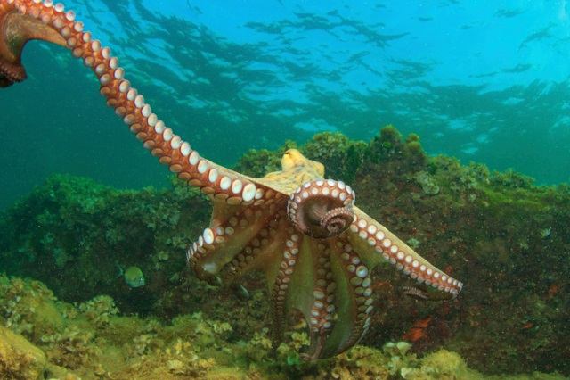15 Interesting Facts About The Octopus You Need To Know
