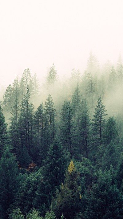 Nature-Mist-Forests-Trees-iPhone-Wallpaper - iPhone Wallpapers