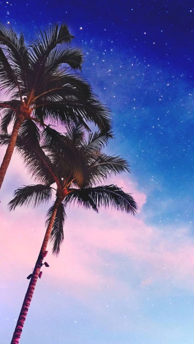 Palm-Trees-iPhone-Wallpaper - iPhone Wallpapers