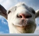 20823568_goat1280[1]