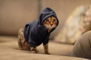 Cutest Kitten hoodie ever!