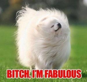 Fluffy dog - Bitch, I'm Fabulous