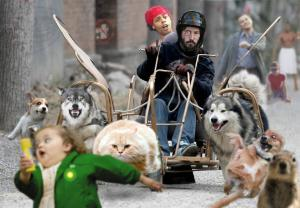 Ridiculous picture - cat sled