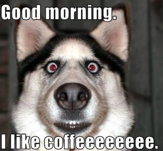 Good morning, I like coffee - dog meme