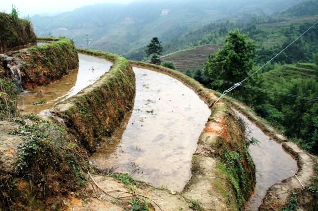 Dragon's Backbone Rice Terraces, Longsheng China close up