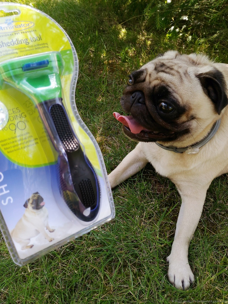 Lovable Furminator Deshedding Tool Furminator Deshedding Tool A Groom Will Pugs Shed Do Pugs Shed More bark post Do Pugs Shed