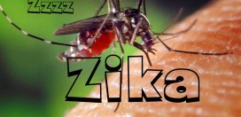 More than 7,000 Suspected Cases of the Zika Virus in Jamaica