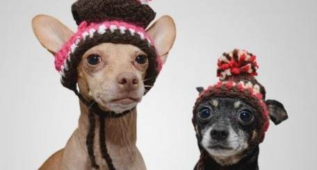 Chihuahua Photo Gifts and Products