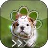 Aoochai Chanlekla - BlurLock - Cute Puppy : Blur Lock Screen Photo Maker Wallpapers Pro アートワーク