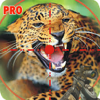 Muhammad Bilal - Jurassic Animal Hunting Pro アートワーク