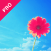 Dat Nguyen - Skywall Pro - Ultra HD+ Wallpapers & Backgrounds アートワーク