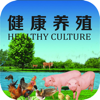binzhang chen - 健康养殖 アートワーク