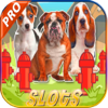 Nguyen Hieu - AAA Casino Slots Of Dogs: Spin Slots Machines Free HD アートワーク