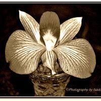 Black & White - Sepia Flowers