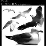 IH_Brushes_Seagulls