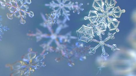 bbc snowflakes