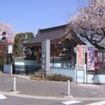 祥泉院(桜)