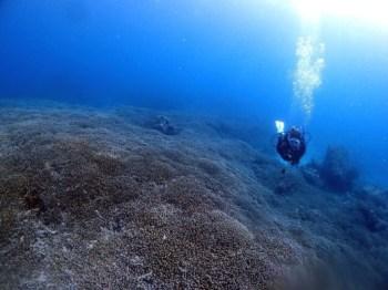 海の中は真っ青