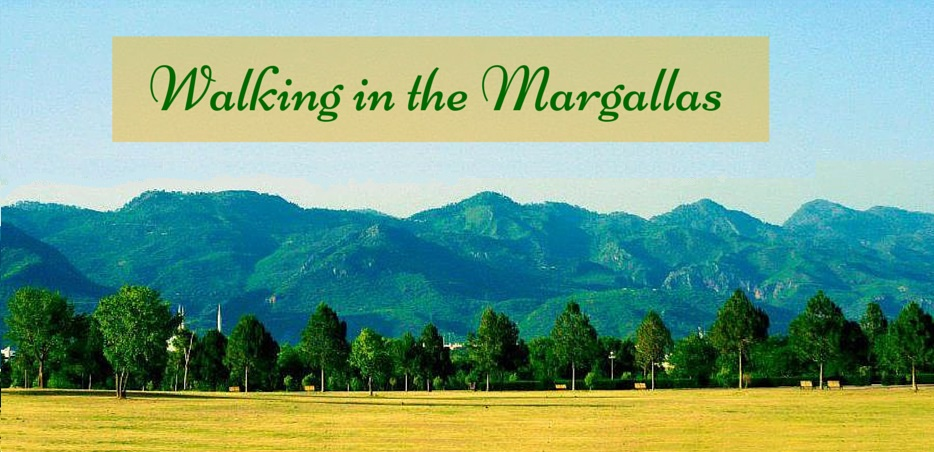 Walking in the Margallas (2)