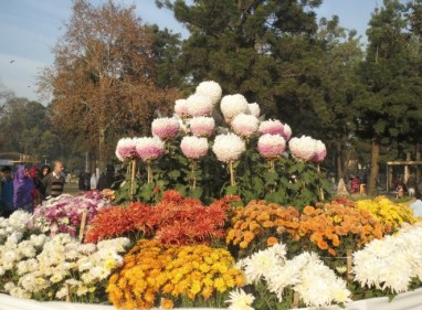 Flowers exhibition at Rose and Jasmine garden in Islamabad