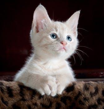 Ayo Pahami Beragam Jenis Suara Anak Kucing