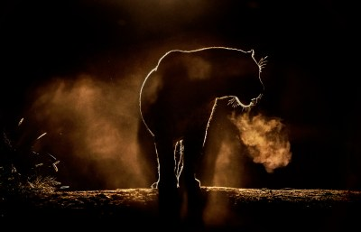 500px Blog » » 21 of the Most Beautiful Wildlife Photos on ...